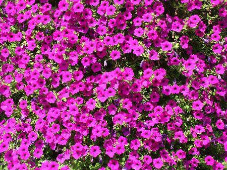 Flowers Stock Photo - 2688468