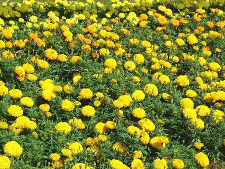 Flowers Stock Photo - 2687942