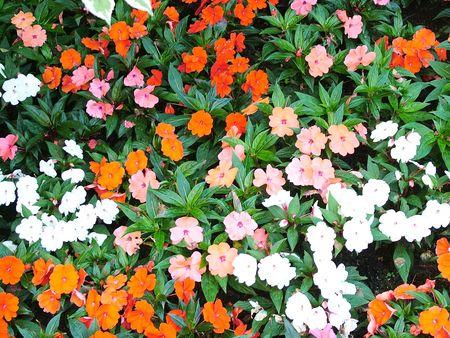 Flowers Stock Photo - 2688469