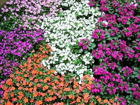 Flowers Stock Photo - 2687489