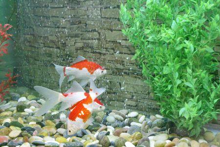 Aquarium Stock Photo - 2765087