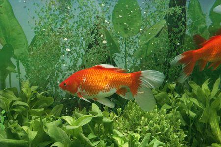 aquarian: Aquarium Stock Photo