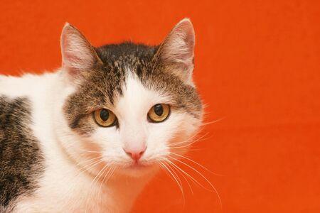Beautiful Cat Stock Photo - 2903158