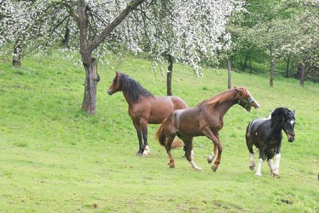 rein: Beautiful Horses