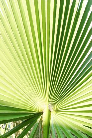 Palm leaf Stock Photo - 3073858