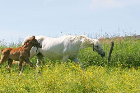 Beautiful Horses Stock Photo - 3088721