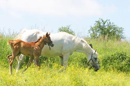 Beautiful Horses photo
