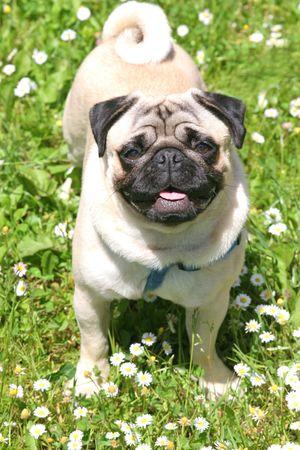 stitting: Beautiful Dog