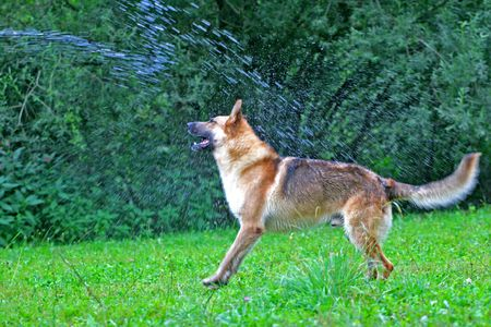 trained: Dog Play Stock Photo