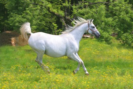 Beautiful Horse Standard-Bild