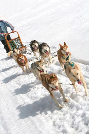 Husky Sled Dogs Stock Photo - 3352173