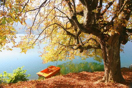 Beautiful Autumn  photo