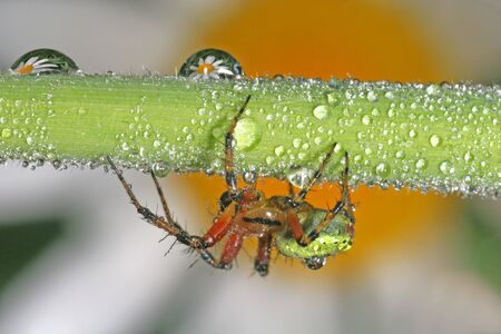 Spider and Dew Drops photo