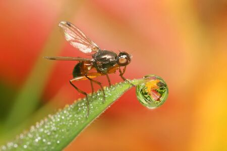 Dew Fly Stock Photo - 3626848