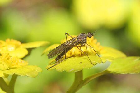 Fly Stock Photo - 3626856