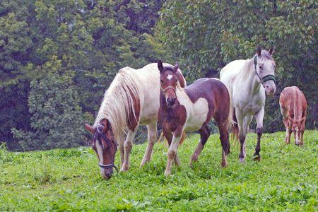 Beautiful Horse Stock Photo - 3666339