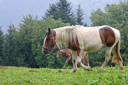 Beautiful Horse Stock Photo - 3666336