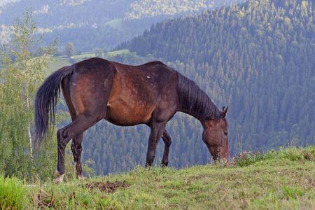 Beautiful Horse Stock Photo - 3666335