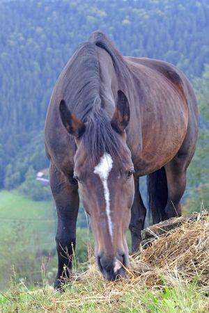 Beautiful Horse Stock Photo - 3666332