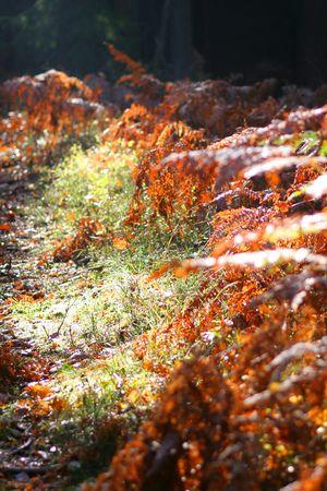 Beautiful Autumn Stock Photo - 3743571