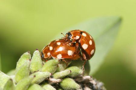 Ladybug Stock Photo - 4022081