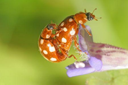Ladybug Stock Photo - 4022077