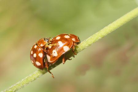 Ladybug Stock Photo - 4022076
