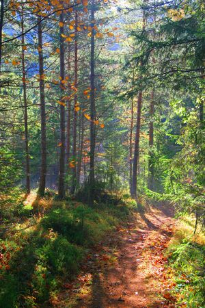 Beautiful autumn colors in the forest