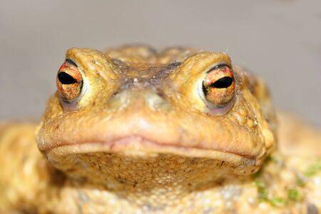 macr: Frog
