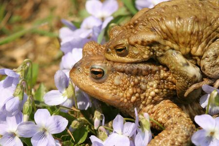 macr: Frog Pair