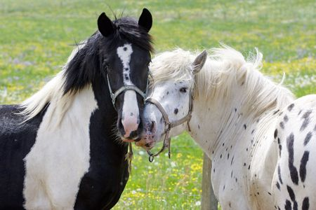 Beautiful Horses photo
