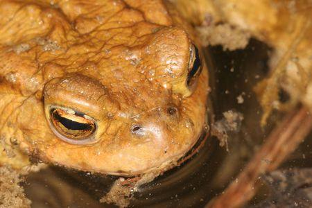 coitus: Frog Eyes