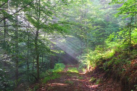 Morning in the wood with sun beam Stock Photo
