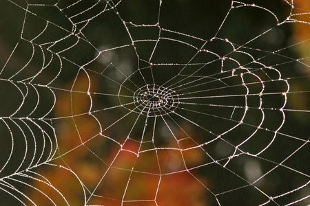 Spider web with drops Stock Photo