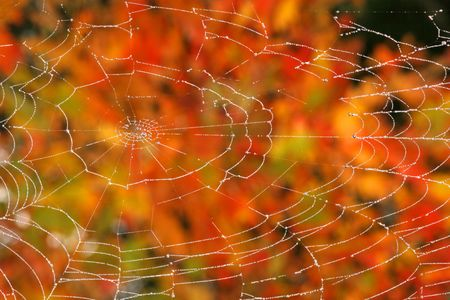 Spider web with drops Stock Photo - 5371513