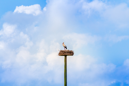 a stork family in nest, high in the clouds, horizontal