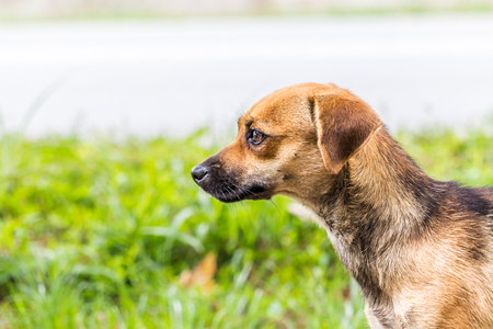 young plummer Terrier homeless looks around