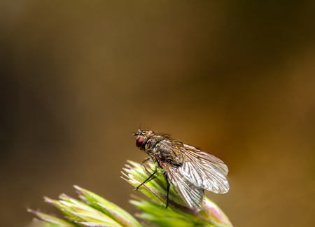 fly is resting on a rye macro, brown background 스톡 콘텐츠