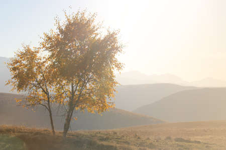 Scenic alone autumn tree on a hill slope with sunny beams on a background of mountains with copy space. 版權商用圖片