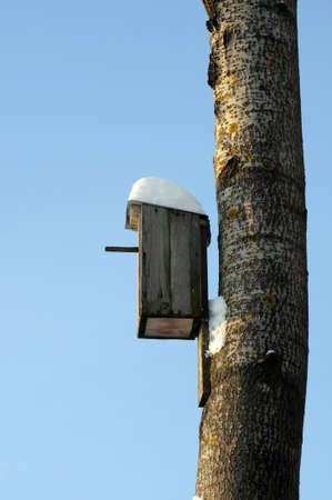 Bird house on a tree at winter time with blue sky in background. photo