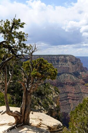 View of Grand Canyon National Park, Arizona US photo