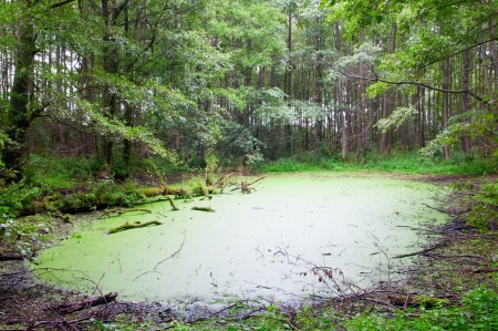 View of Swamp in the Green Forest photo