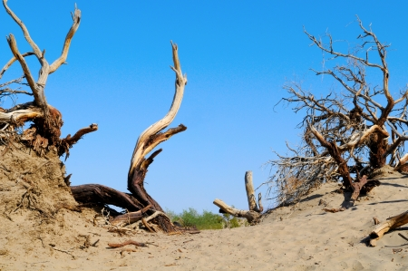 dead wood: Dead Wood in Death Valley, Nevada, US Stock Photo