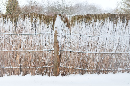 Reed Fence in Winter, Rusne Lithuania photo