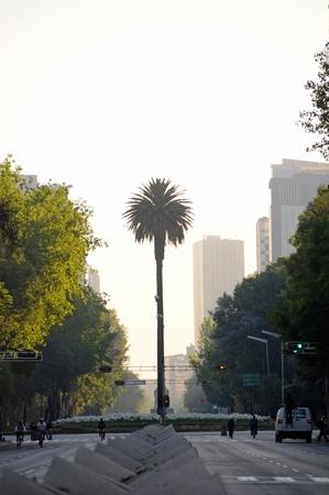 paseo: Avenue Paseo de la Reforma in morning light, Mexico City