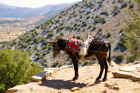 Donkeys are used to transport tourists in summer time, Crete island, Greece  Stock Photo - 26159210