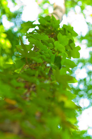Tree and green leaves in the forest Stock Photo - 16483817