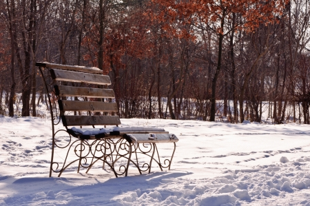 Park Bench In Winter - wood bench in a park covered with snow photo
