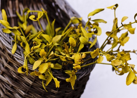Dried mistletoe in a wooden basket photo