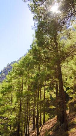 Samaria Gorge, island of Crete, Greece - Stock Photo photo